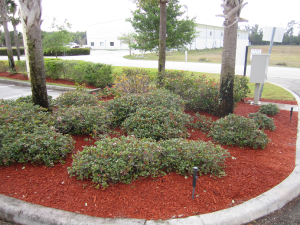 red landscaping mulch